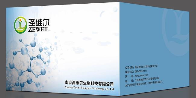 兔胶原酶I(Collagenase I)ELISA试剂盒, 兔Collagenase I ELISA